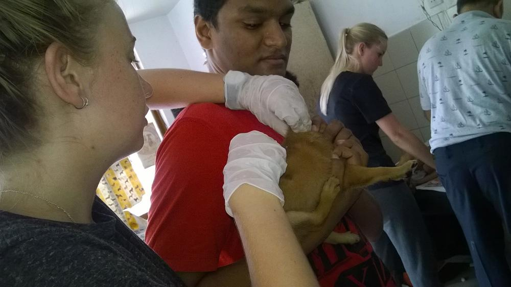 A pet owner observes as his dog is examined by a Veterinary Medicine intern in Sri Lanka.